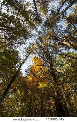 Treetops Purgatory Chasm
