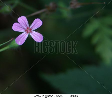 Gentle Purple Flower