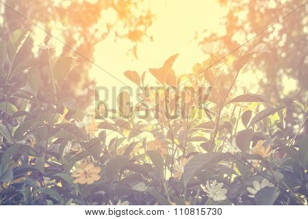 Selective Focus Of  Yellow Flowers  With Sun Light Effect, Vintage Toning Color