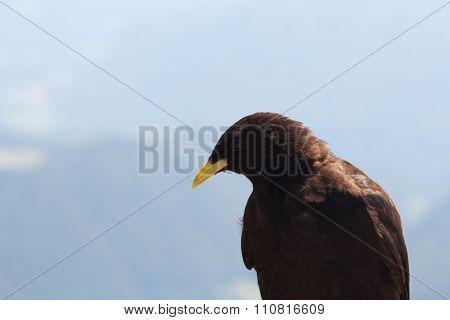 A portret of a bird