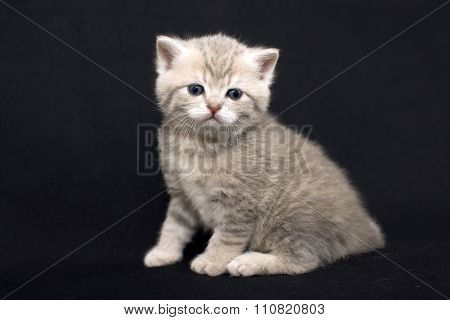 Cute kitten on a dark background.