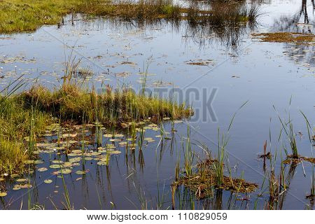 Landscape In The Okavango Swamps