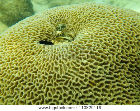 Close up to polyp of massive coral