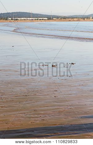 Abstract In Morocco  Africa Ocean Wave And  Bird