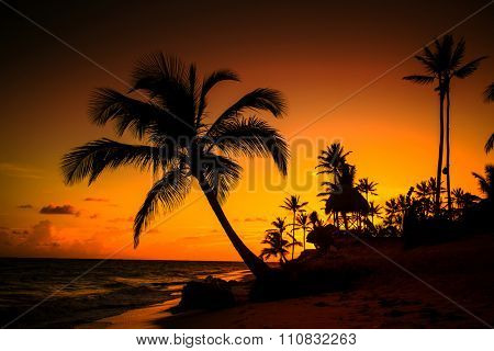 Beautiful sunset with palm trees and reddish sky