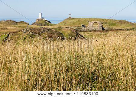 Long Grass Llanddwyn Island