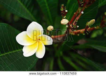 White Flower Bloom