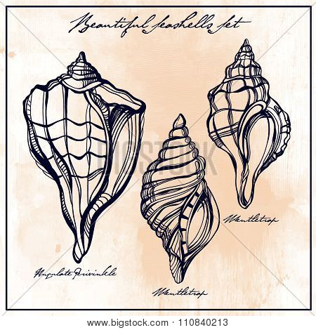 Hand drawn set of seashells.