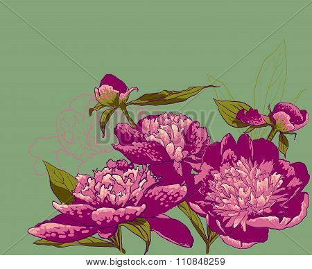 Peony flowers vector llustration