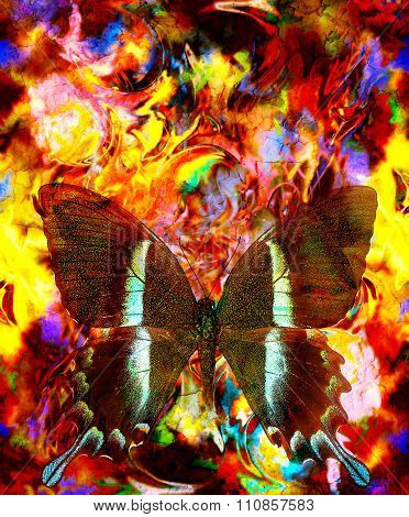 illustration of a butterfly, mixed medium, abstract color background and color fire effect., red, or