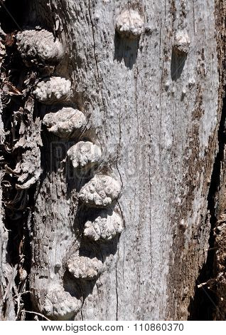 Bulbous Bumps: Tree Texture
