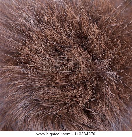 Brown fur texture background