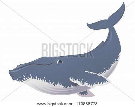 Funny Humpback Whale