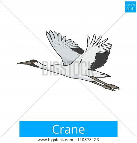 Crane learn birds educational game vector