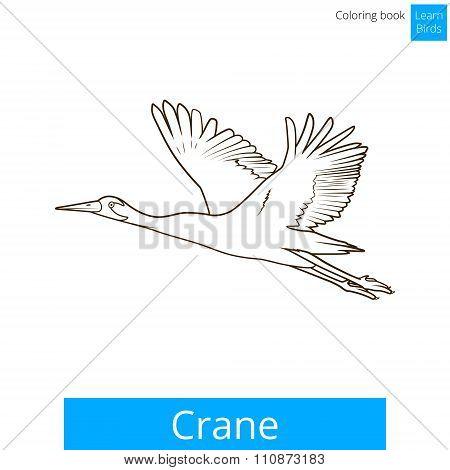 Crane bird learn birds coloring book vector