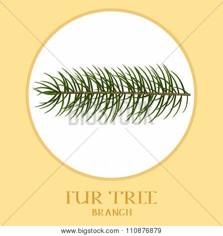 Vector Christmas Tree Branches For Your Design .