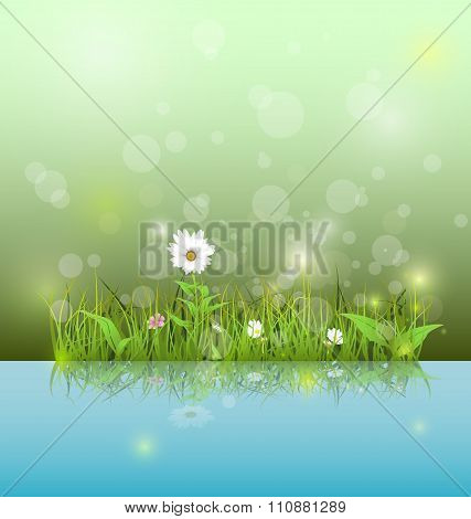 Illustration Green grass and leaves with white daisy wildflower and shadow reflection on light blue