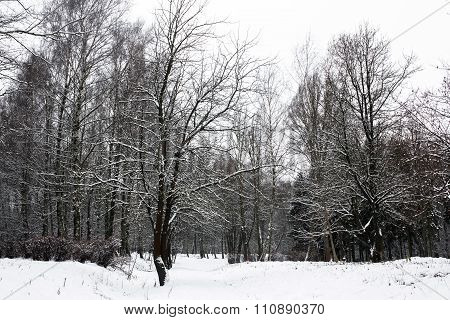 Beautiful calm winter day. Carpathians. National park