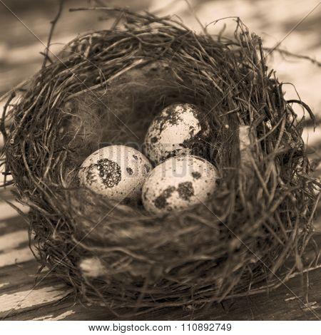 Raw quail eggs