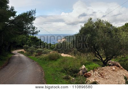 Country Road Through Olive And Pine Trees