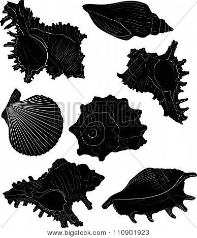 illustration with seven black shellfishes sketches isolated on white background