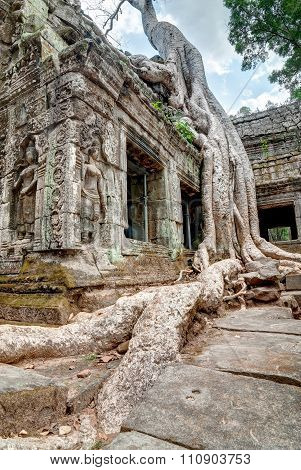 Root Of Giant Tree Over Ta Prohm Temple