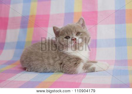Cute kitten, little fluffy baby.