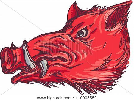 Wild Boar Razorback Head Side Drawing