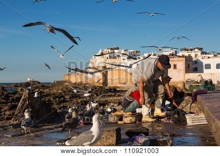 Seagulls And Fishermen