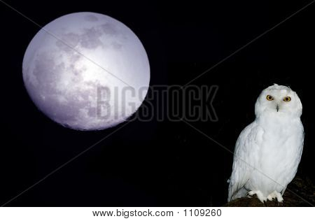 Full Moon Over California With Snowy Owl1