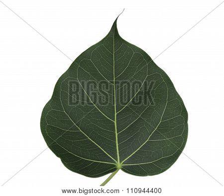 Pho Leaf