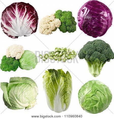 Cabbage.