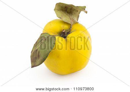 Fresh ripe quince