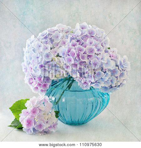 hydrangea flowers in a vase