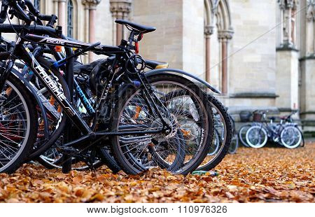 Parked Bikes And Autumn Leaves