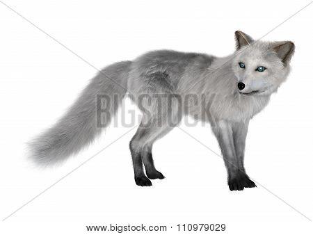 Arctic Fox On White