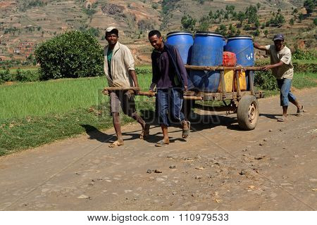 Betafo, Madagascar, November 17, 2015 : Heavy Load On The Path. The Irrigated Rice Paddies Of The Ar