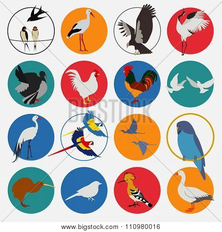 Some types of birds icon set. Vector flat style