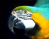 picture of polly  - The head of a parrot - JPG