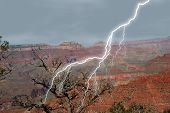 picture of grand canyon  - Lightening striking at Grand Canyon near dead tree - JPG