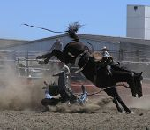 picture of bucking bronco  - a coboy hits the dust before his time is up - JPG