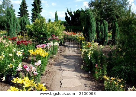 Garden With Many Kinds Of Daylily