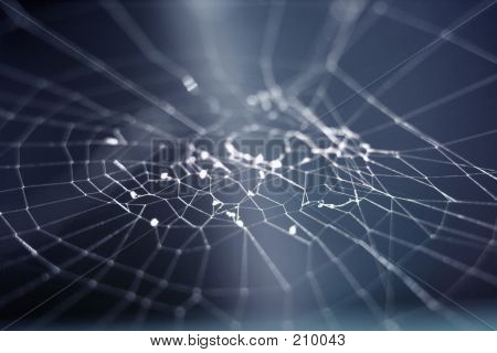 Light Web