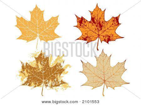 Maple Grunge Leaves