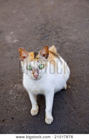 Pregnant Stray Cat