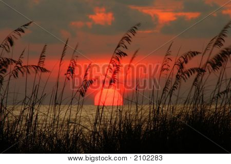 Seaoat Sunset
