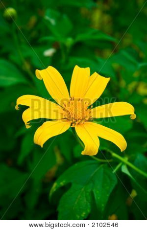 Amazing Yellow Flower