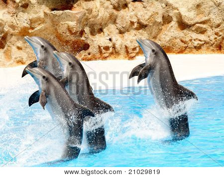 Bottlenose Dolphins Performing Tail Stands In A Show