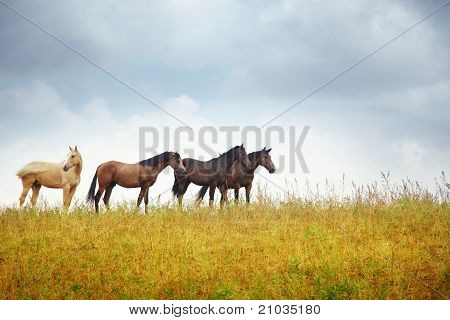 Four Horses In The Steppe