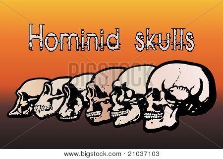 Menselijke schedels